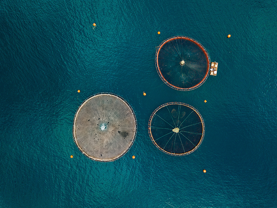 Salmon Fish Farms with Floating Cages